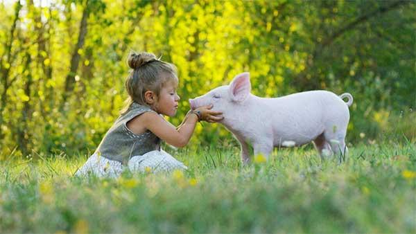island.lk: Veganism, the game changer