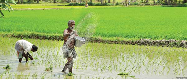 Agrochemical ban: Heading for national disaster? – The Island - The Island.lk