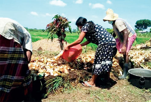 Accelerated program launched to manufacture organic fertilizer in Mahaweli Zones – The Island
